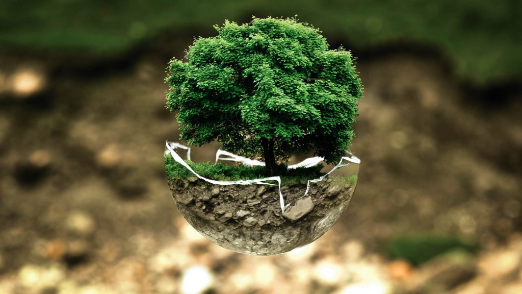 environmental protection, green, tree, ecoinnovation, solutions